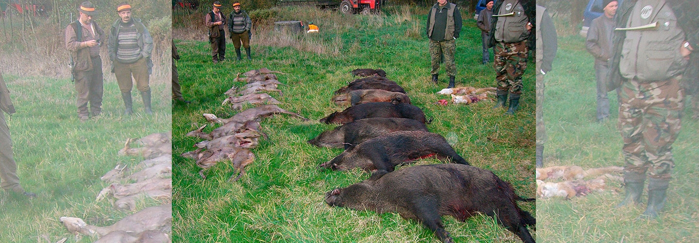 Teglskovens Hunting - jagtrejser til Polen - Drivjagt